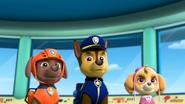 Skye, Zuma, and Chase