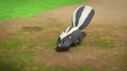 Skunky1