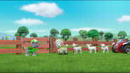 Sheep 54