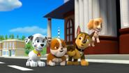Pups Monkeying Around!