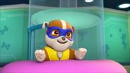 Super pup 16