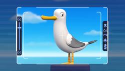 Seagull- LB1
