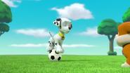 Pups Soccer 6