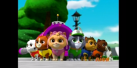 Kitten Catastrophe Crew/Appearances