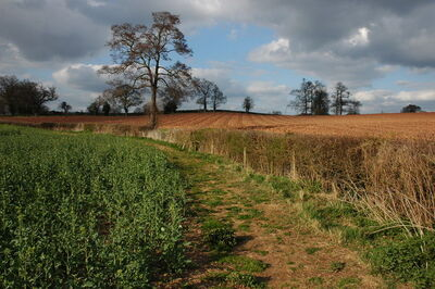 The Poet's Path II - geograph.org.uk - 755142
