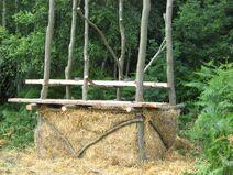 Treebog7