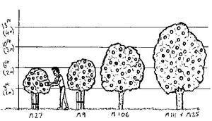 Applerootstock