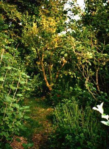 File:Forestgarden2.jpg