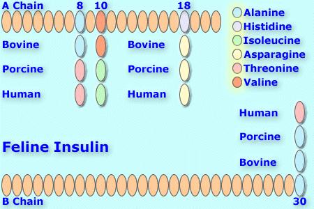 File:Felineinsulin8.png