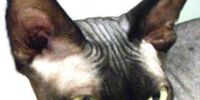 Wiki Pets of the Month