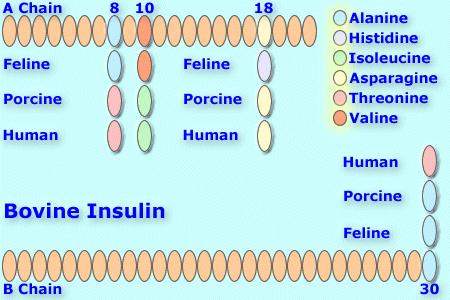 File:Bovineinsulin8.png