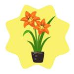 Homegrown Orange Daylily