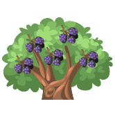 Blackberry tree