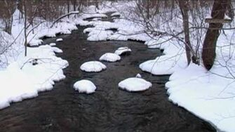 Relaxing Sounds of a Flowing Stream