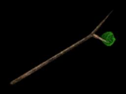 Branchofpakupaku id