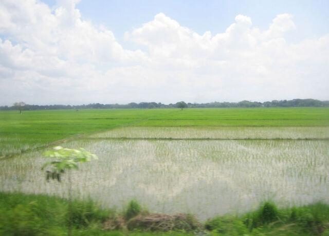 File:NE rice paddy.jpg