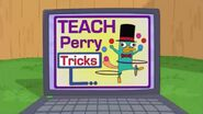 Teach Perry tricks