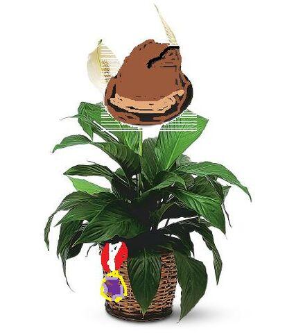 File:Real Planty.jpg
