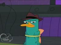 Perry in hoop