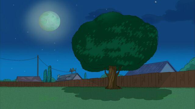 File:Empty backyard as shown at night.jpg