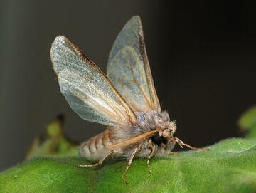 Moths2