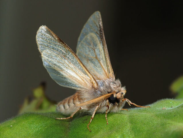 File:Moths2.jpg