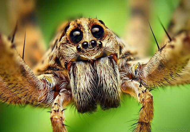 File:Spiders2.jpg