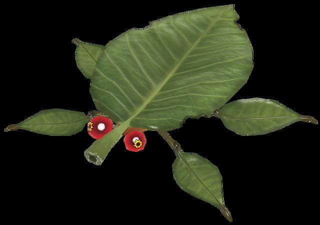 File:Skitter leaf.png