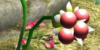 Burgeoning Spiderwort