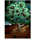 File:Farm-olives-ripe.png