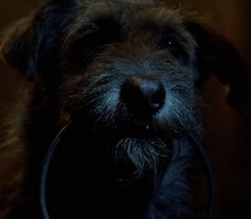 File:Prison dog.png