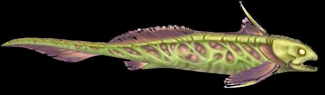 File:Fish 8.png