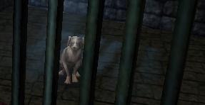 File:Jailed Dog..jpg