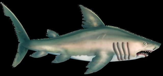 File:Fish 18.png