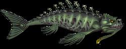 Fish 9