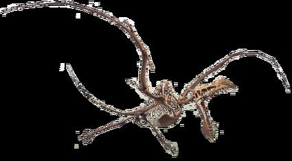 Fossile Aerodactyl