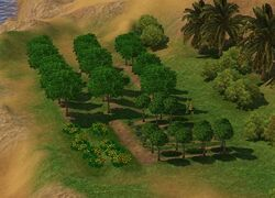 Unnamed orchard