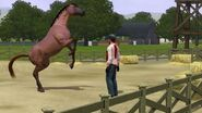 K,NjM4MTIwMTYsNDYyMDQwNjM=,f,455230 The Sims 3 Pets Trai medium