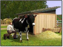 Krowa The Sims 3