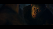WPOTA Caesar asking Bad Ape where he got the MRE
