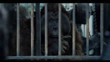 Maurice in cage