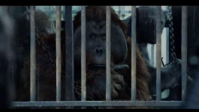File:Maurice in cage.jpg