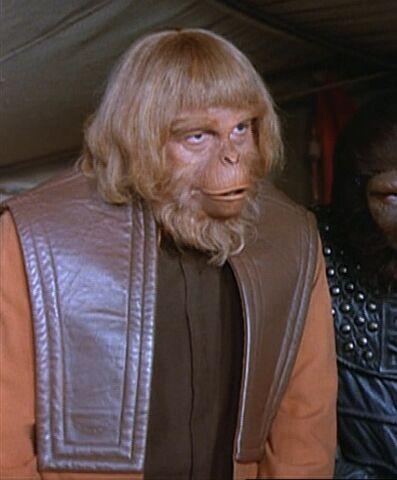 File:Orangutan council member.jpg
