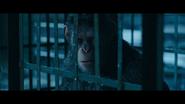 WPOTA Caesar in a cage