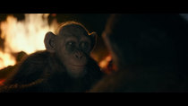WPOTA Bad Ape 5