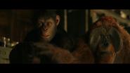 WPOTA Maurice lowers Caesar's gun