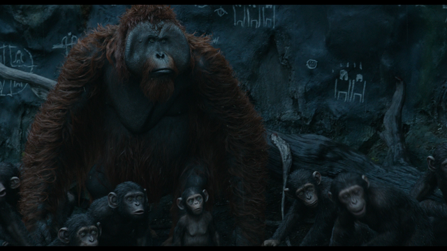 File:Maurice with young apes.png