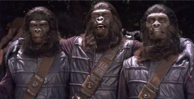 File:Gorilla Photograph.jpg
