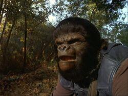 Gorilla guard