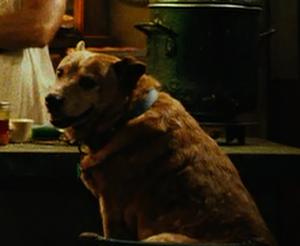 Rusty looks at Wray